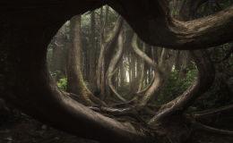 Победителем престижного конкурса пейзажной фотографии стал Адам Гиббс со снимком Танцующий лес