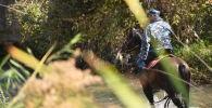 Сотрудник МВД на лошади прочесывает жилмассив Энесай