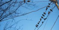Голуби на электрических проводах в Бишкеке. Архивное фото