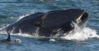 У побережья Южной Африки дайвер, снимавший документальный фильм о подводном мире, едва не стал жертвой кита.