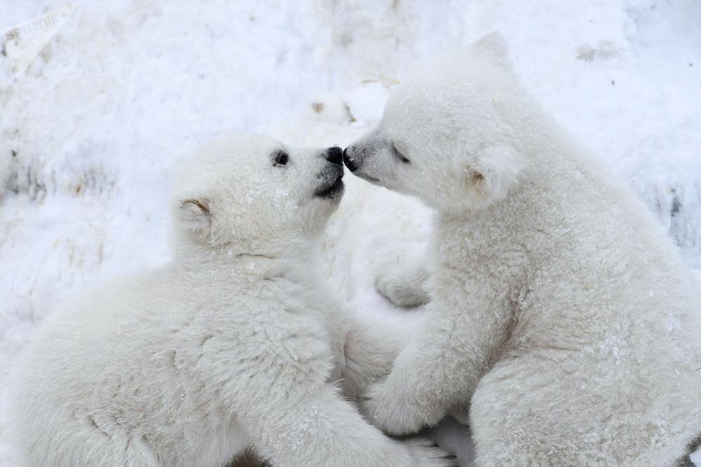 Новосибирскидеги (Россия) зоопарктагы мамалактар