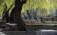 Отдыхающие на скамейке в одном из парков Бишкека