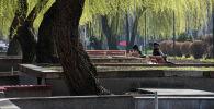 Бишкектеги сейил бактын скамейкасында эс алуучулар. Архив