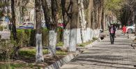 Люди идут по тротуару в Бишкеке. Архивное фото