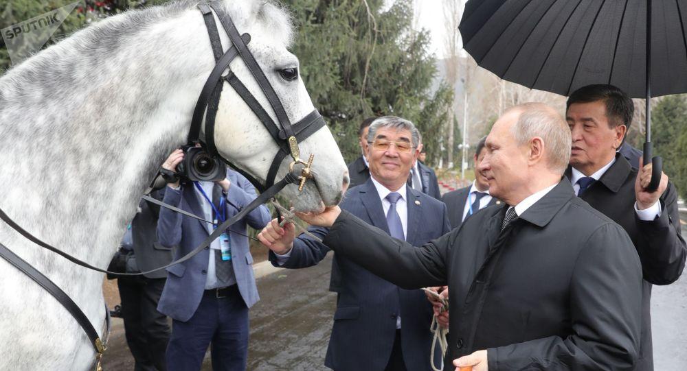 Президент РФ Владимир Путин с подаренным президентом КР Сооронбаем Жээнбековым Орловским рысаком в Бишкеке.