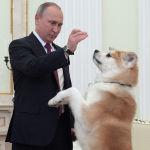 Путин с собакой Юмэ в преддверии официального визита в Японию