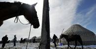 Привязанная лошадь. Архивное фото