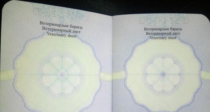 Идентификационная карта (паспорт) ловчей хищной птицы в КР