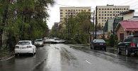 В столице на проезжую часть улицы Тыныстанова упало дерево, из-за чего машины не смогли проехать по данному участку