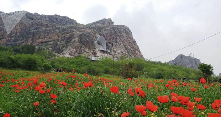 На склонах Сулайман-Тоо в Оше расцвели тысячи алых маков