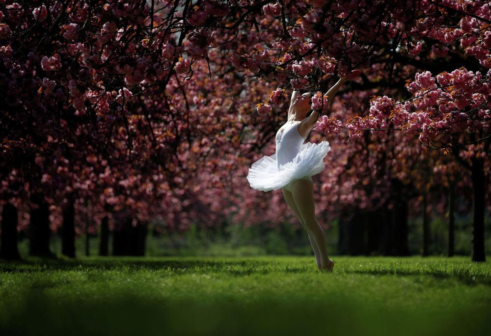 Танцовщица в цветущем вишневом саду в пригороде Парижа
