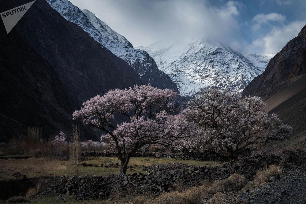 Баткен облусундагы өрүкзар