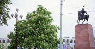 Вид на памятник Манасу на площади Ала-Тоо в Бишкеке дерево
