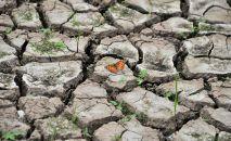 Бабочка на высушенной земле. Архивное фото