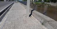 Межведомственная комиссия во время выявления дефектов на улицах, построенных и отремонтированных на средства китайского гранта в рамках первой фазы проекта развития улично-дорожной сети в Бишкеке
