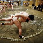 Юные борцы сумо в Университете спортивной науки в Токио