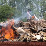 Читван улуттук паркында (Непал) аткезчилер жаныбарларга мыйзамсыз аңчылык кылат. Алардан алынган түрдүү заттар, жаныбарлардын калдыктары өрттөлүүдө.