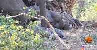 Туристы сняли слониху, которая нежно будит своего малыша. Интернет-пользователи активно обсуждают это видео.