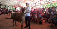 Гиссарский баран из Кыргызстана по кличке Гулливер занял первое место на международной выставке (фестивале) породистых баранов в Казахстане.