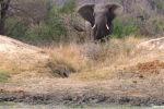 Фотограф дикой природы Джуди Лемберг запечатлела на камеру неудачную охоту леопарда в национальном парке Крюгера (ЮАР).