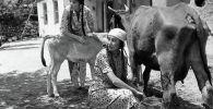 Снимок, на котором заслуженная артистка Киргизской ССР Таттыбубу Турсунбаева доит корову, был сделан в Ошской области в 1965 году. Рядом с Турсунбаевой — заслуженный работник культуры Клара Юсупжанова.