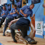 Рефери смотрят за стрижками овец на Чемпионате мира по стрижке овец и обработке шерсти в Ле Дорате. Франция, 4 июля 2019 года.