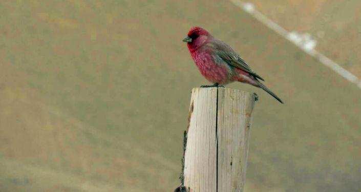 В Кыргызстане наблюдается увеличение численности редких видов краснокнижных и перелетных птиц на охраняемых природных территориях.
