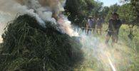 Под Бишкеком обнаружили и сожгли пять тонн конопли