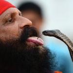 Индуист выступает со змеей во время празднования священного месяца Шраван