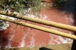 Очевидец снял кровавую реку возле скотного рынка. Местные жители опасаются за безопасность своего здоровья.