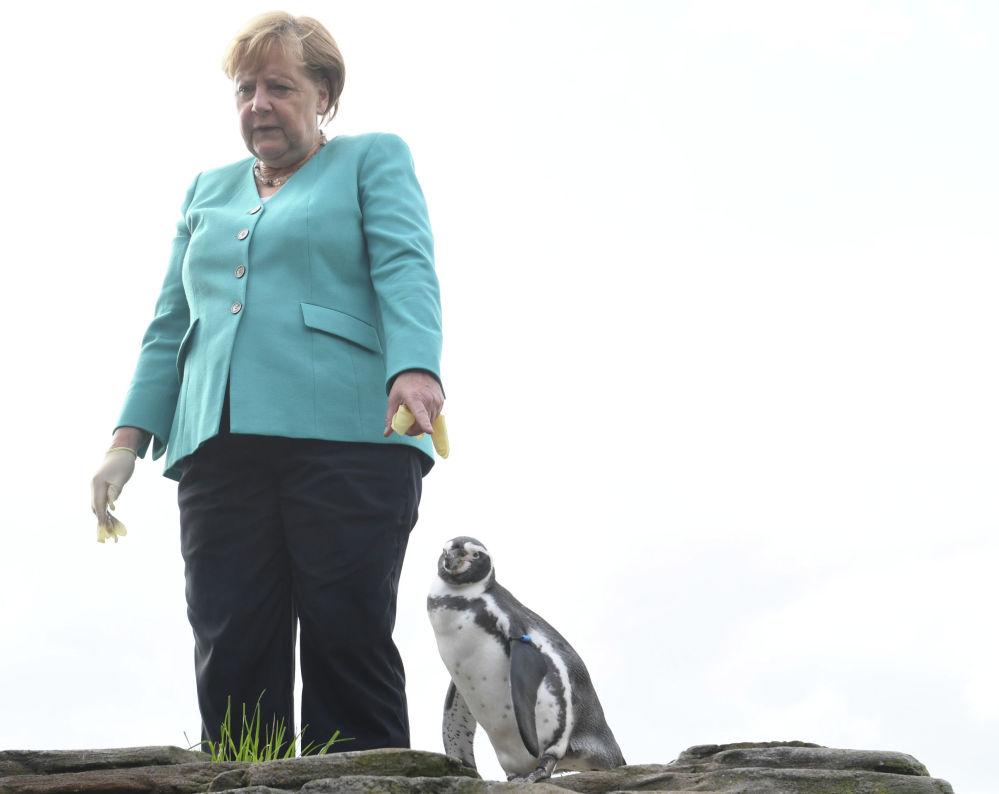 Канцлер Германии Ангела Меркель кормит пингвинов во время визита в Океанографический музей в Штральзунде.