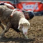 Мальчик катается на овце на ярмарке в штате Айова в США