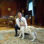 17 июля 2019. Председатель правительства РФ Дмитрий Медведев и щенок пятнистого алабая по кличке Айк, которого в мае ему подарил президент Туркмении Гурбангулы Бердымухамедов, в резиденции Горки.