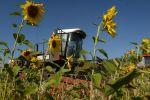 Уборка урожая кормовых культур на полях. Архивное фото