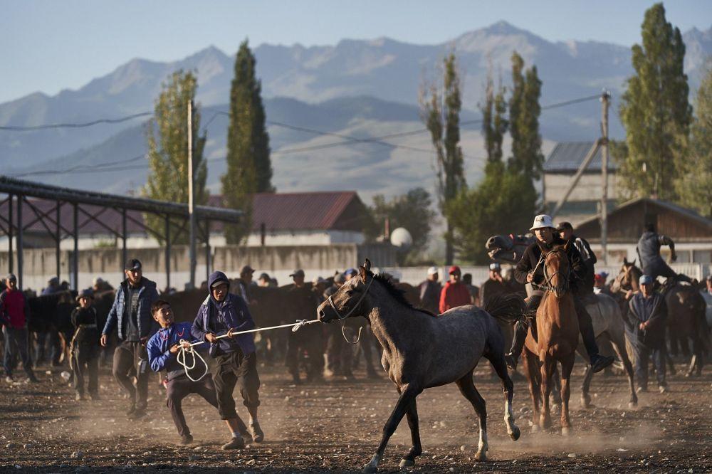 Мальчик тянет лошадь на аркане на каракольском рынке