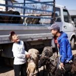 Дети на скотном рынке