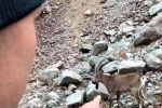 Видеодон кишиден беш метр эле ары жакта эч нерседен коркпой оттоп жүргөн тоо текелерди көрүүгө болот.