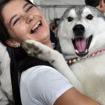 Женщина держит хаски на выставке собак в Бишкеке
