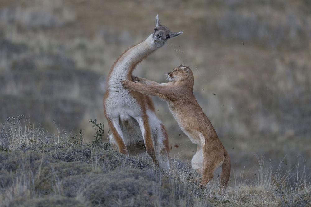 Инго Арндт стал победителем в категории Поведение млекопитающих
