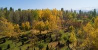 Sputnik Кыргызстандын оператору Түштүк дарбазанын (Жеңиш паркы) үстүнөн дрон учуруп, күзгү көрүнүшүн тартып келди.
