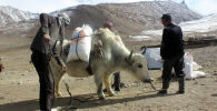 Этническим кыргызам, проживающим на Малом и Большом Памире в Афганистане, доставили гуманитарную помощь из Кыргызстана