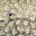 Кытайдын Цзянси провинциясында тамак жей турган таякчаларды даярдоодо бамбуктарды кургатып жаткан учур.