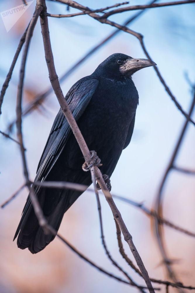 Ворона сидит на ветке дерева
