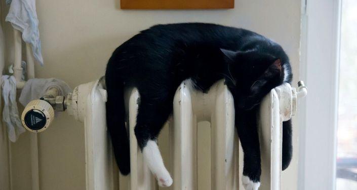 Кошка отдыхает на отопительной батарее