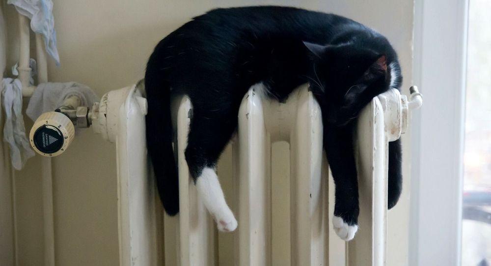 Кошка отдыхает на отопительной батарее. Архивное фото