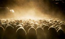 Отара овец идет к пастбищу. Архивное фото