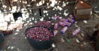 В Чуйской области выявлен подпольный цех, где незаконно изготавливали химические средства, которые продавали на рынках Кыргызстана