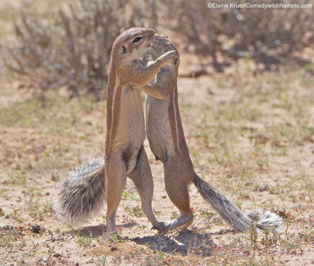 Это стоит увидеть! Самые забавные фото дикой природы в 2019 году