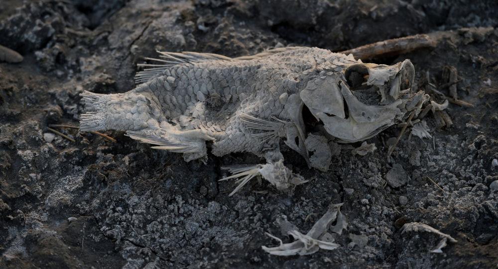 Мертвая рыба. Архивное фото