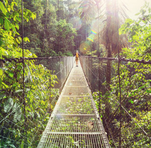 Прогулка в джунглях Коста-Рики в Центральной Америке